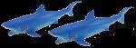 Add & Subtract 2 Blue Sharks Bev Dunbar Maths Matters