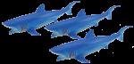 Add & Subtract 3 Blue Sharks Bev Dunbar Maths Matters