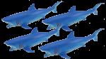 Add & Subtract 4 Blue Sharks Bev Dunbar Maths Matters