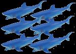 Add & Subtract 6 Blue Sharks Bev Dunbar Maths Matters