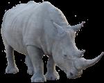 African Rhinoceros 2 Bev Dubar Maths Matters