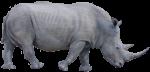 African Rhinoceros Bev Dunbar Maths Matters