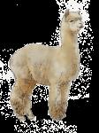 Alpaca - John Duffield duffield-design