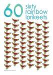 60 rainbow lorikeets Poster John Duffield duffield-design