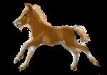 Baby Horse 50 kg - John Duffield duffield-design