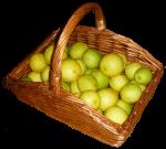 Estimate quanity basket of lemons (35) Bev Dunbar Maths Matters