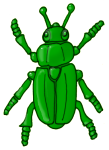 Beetle - Green - John Duffield duffield-design
