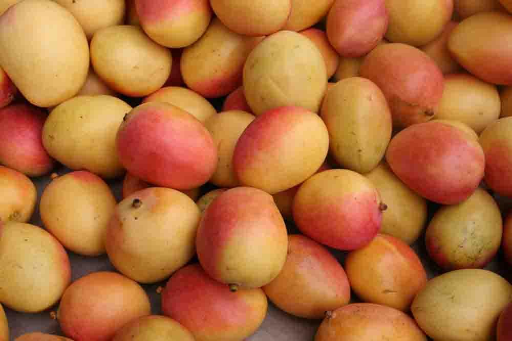 Mangoes Bev Dunbar Maths Matters Mangoes copy
