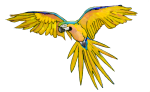Bird  - Macaw - John Duffield duffield-design