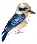 Bird - Kookaburra - John Duffield duffield-design