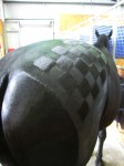 Black Horse Checkerboard Pattern at the Show Bev Dunbar Maths Matters