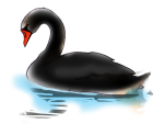 Black Swan - John Duffield duffield-design