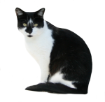 Black-and-White-Cat-Bev-Dubar-Maths-Matters-Resources