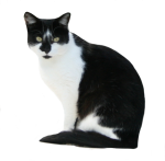 Black-and-White-Cat-Bev-Dunbar-Maths-Matters-Resources