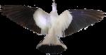 Black and white bird (3D Symmetry) Bev Dunbar Maths Matters