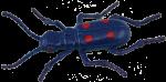 Blue Beetle Bev Dunbar Maths Matters