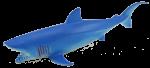 Blue Shark Bev Dunbar Maths Matters