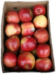 Box of 26 Apples Bev Dunbar Maths Matters