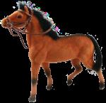 Brown Horse Bev Dunbar Maths Matters