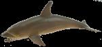 Brown Shark Bev Dunbar Maths Matters