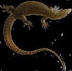 Brown lizard Bev Dunbar Maths Matters