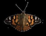 Butterfly Bev Dunbar Maths Matters