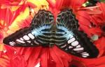Butterfly Symmetry Singapore Bev Dunbar Maths Matters