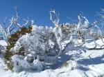 Calendar - Seasons - Frozen Tree Snowy Mountains Bev Dunbar Maths Matters