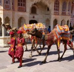 Camel Patterns Jaipur India Bev Dunbar Maths Matters