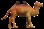 Camel Quarters - 1 out of 4 camels - Bev Dunbar Maths Matters