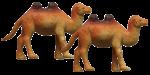 Camel Quarters - 2 out of 4 camels - Bev Dunbar Maths Matters
