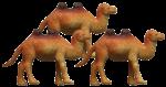 Camel Quarters - 3 out of 4 camels - Bev Dunbar Maths Matters