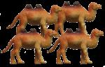 Camel Quarters - 4 out of 4 camels - Bev Dunbar Maths Matters