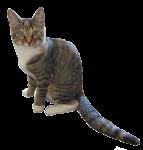 Cat Halves - 1 out of 2 cats - Bev Dunbar Maths Matters