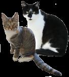 Cat Halves - 2 out of 2 cats - Bev Dunbar Maths Matters