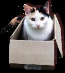 Cat in a Box Bev Dunbar Maths Matters