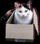 Cat in a rectangular prism Bev Dunbar Maths Matters
