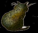 Cat4back - John Duffield duffield-design