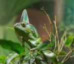 Chameleon Bev Dunbar Maths Matters