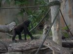 Chimpanzee Playground Bev Dunbar Maths Matters