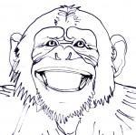 Chimpanzee Smiling B&W - John Duffield duffield-design