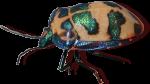 Christmas Beetle Bev Dunbar Maths Matters