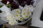 Chrysanthemums $6 a Bunch Bev Dunbar Maths Matters