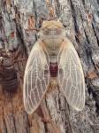 Cicada 3D Symmetry Bev Dunbar Maths Matters