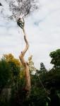 Climbing a 17 m tree Bev Dunbar Maths Matters
