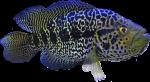 Colourful Groper tropical Fish Bev Dunbar Maths Matters