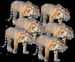 Count by 6s - Tigers Bev Dunbar Maths Matters