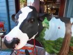 Cow Number 24 Bev Dunbar Maths Matters
