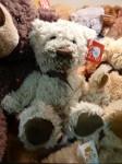 Cream Bear $20 Bev Dunbar Maths Matters