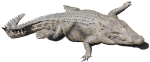 Crocodile Bev Dunbar Maths Matters